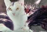 the kitty sibs